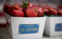Oxnard strawberries for sale. ©Todd Bigelow/2015